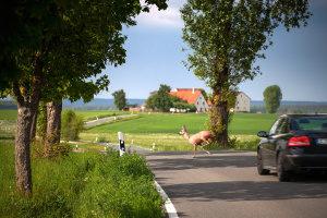 Eine Geschwindigkeitsüberschreitung auf der Landstraße kann verschiedene Folgen haben.