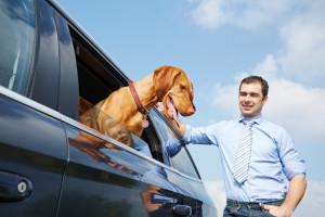 Hund im Auto transportieren nach dem Gesetz: Hunde im Kofferraum zu transportieren, ist möglich, sollte aber gesichert ablaufen