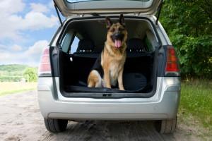 Hunde oder Tiere im Auto transportieren nach StVO: Der Hundetransport im Auto sollte gemäß der Vorschriften ablaufen